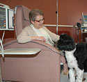 Bruno the Therapy Dog